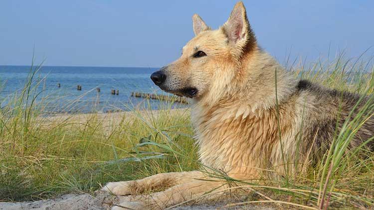 Hund am Strand von Boltenhagen